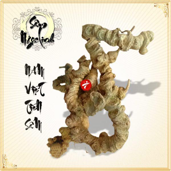 Sâm Ngọc Linh núi 80 năm tuổi 7–8 lạng 1 củ