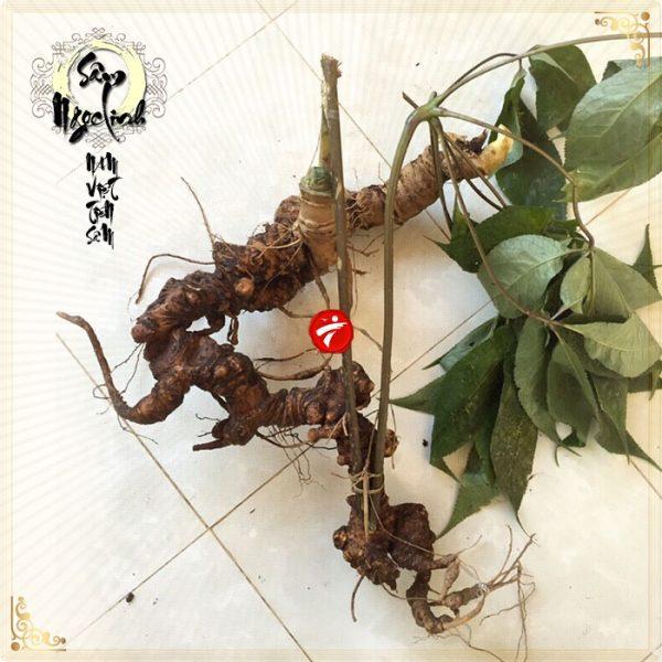 Sâm Ngọc Linh tự nhiên 90 năm tuổi loại 1kg-1,2kg/củ