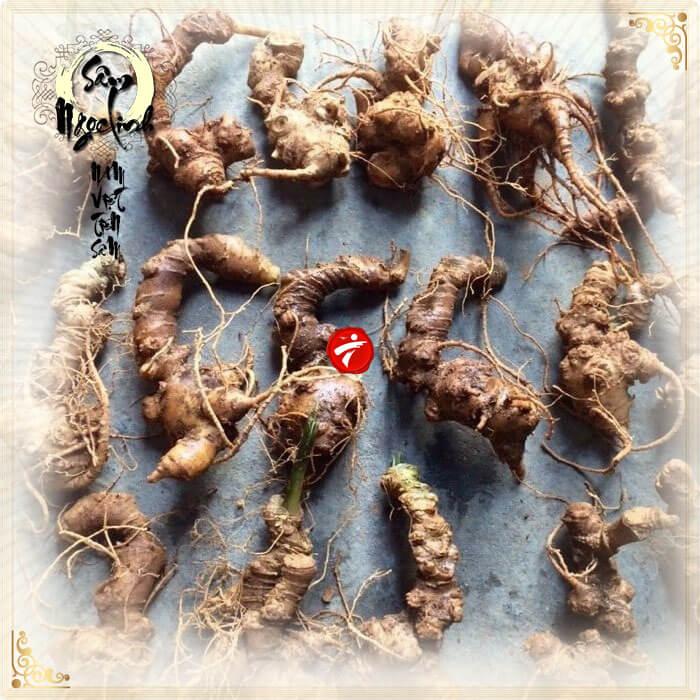 Sâm Ngọc Linh trồng Quảng Nam loại 10 củ/kg NS341