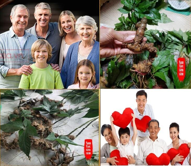 Sâm Ngọc Linh là sản phẩm chăm sóc sức khỏe tốt cho cả gia đình