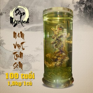 Bình sâm ngọc linh trăm năm tuổi loại 1,9 kg 1 củ